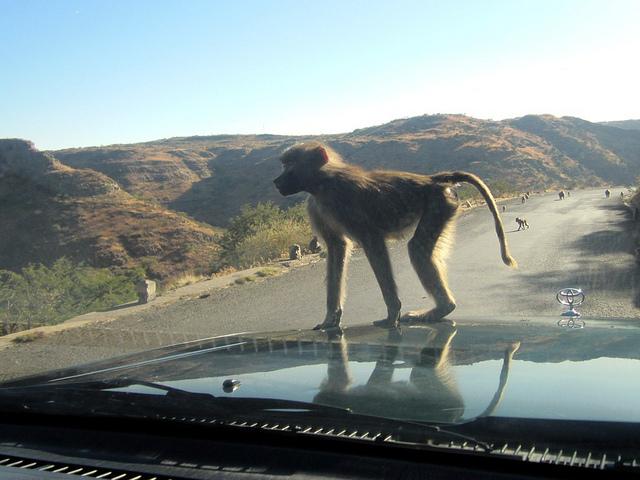 Asmara to Mendefera Road