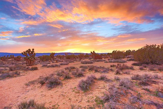 Antilope Valley