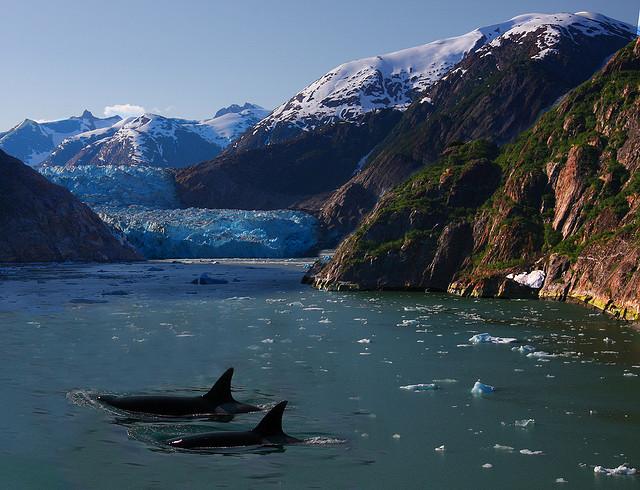 Aljašský fjord