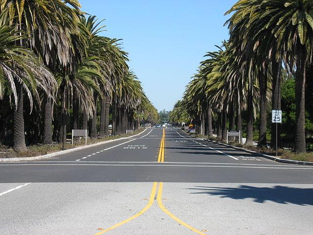 Palm Drive