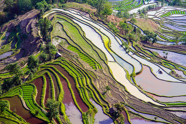 Yuanyang Rice Terraces