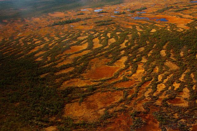 Yugansky Nature Reserve